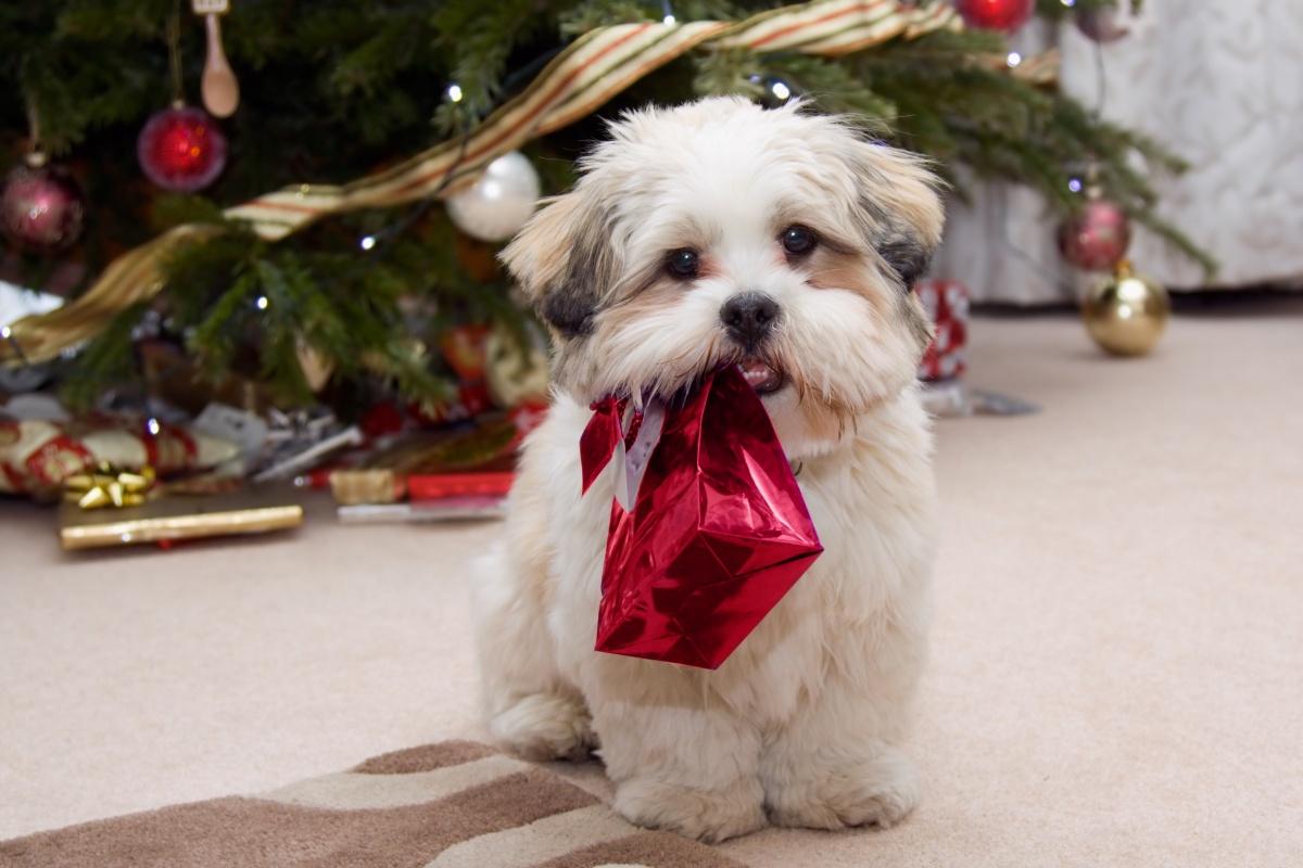 Новый год - время чудес и подарков