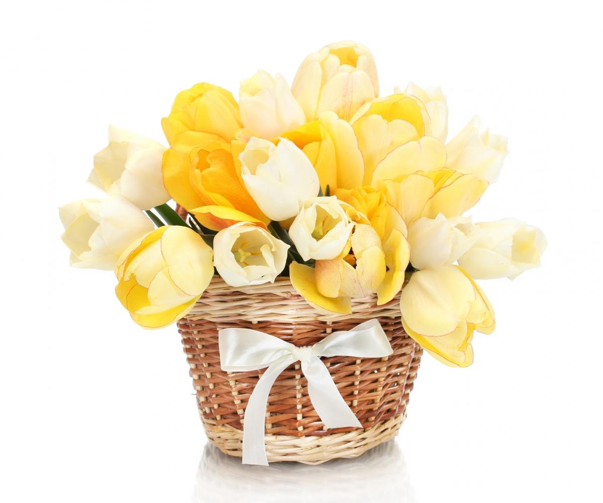 горшечные тюльпаны в подарочной корзине