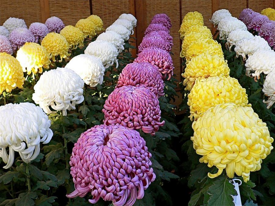 красивые фото букетов цветов в вазе