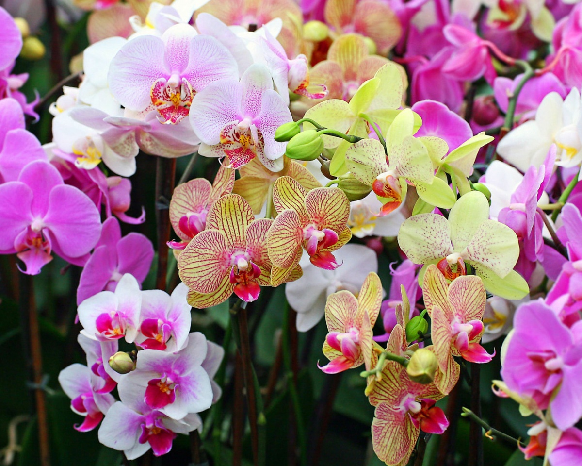 виды орхидея уход и размножение в домашних условиях