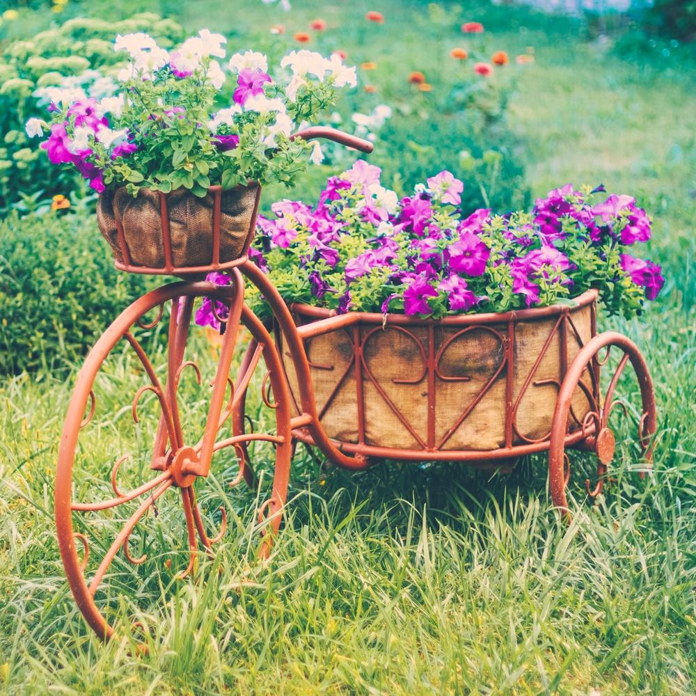 Цветы которые могут расти в тени фото и названия