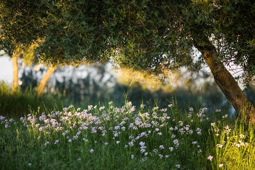 Цветы под деревом