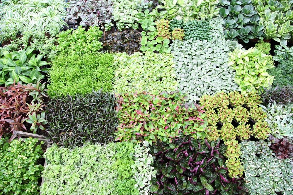 Уплотненные посевы и посадки