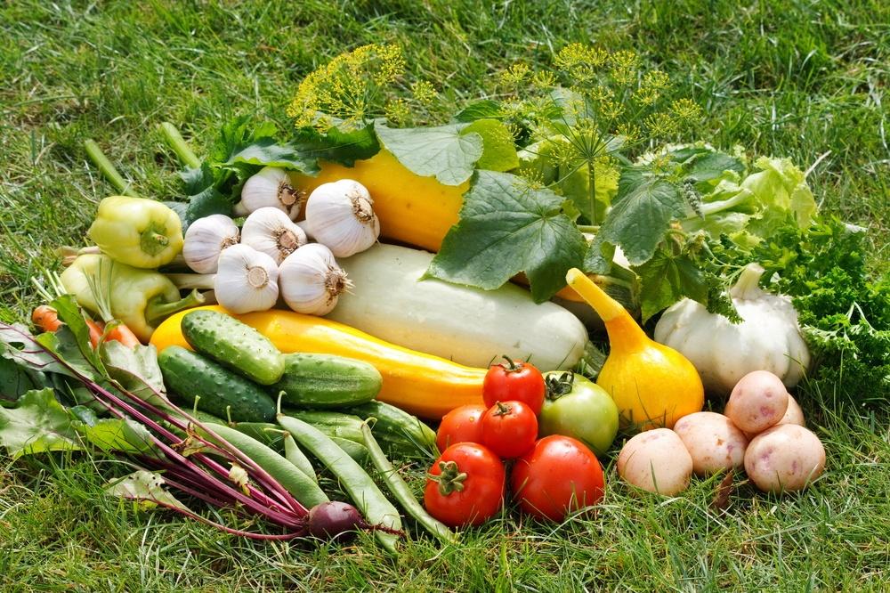 В Приамурье готовы закрыть потребности региона в зерне и овощах