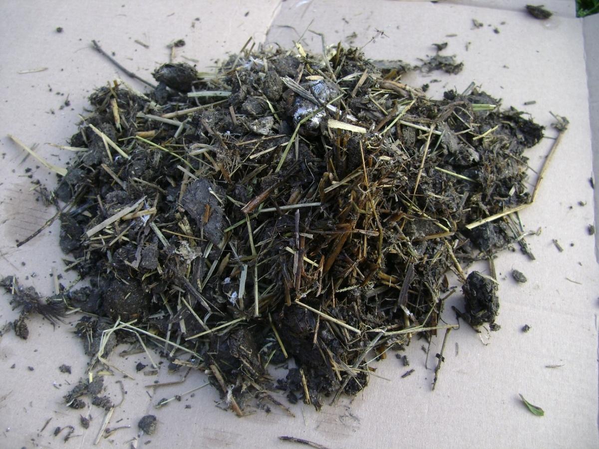 Органическое удобрение - смесь золы и птичьего помета