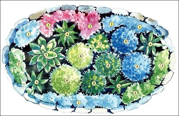 Обязательно учитывайте высоту цветов.  Окантовать клумбу лучше низкорастущими (до 20 см) растениями: примулами...