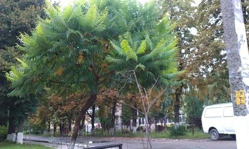 Не знаете как называется это дерево