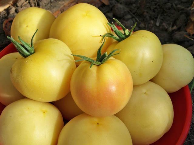 Белоплодные томатыФото с сайта http://derevnyaonline.ru