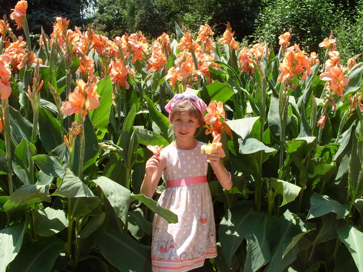 Фото высоких садовых цветов