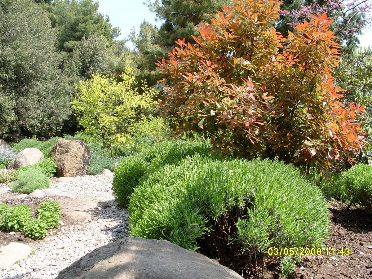 Расположился сад душистых растений