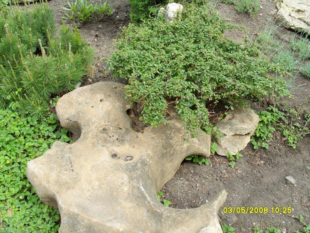 Растения в рокарии высаживаем на определенное растение друг от друга
