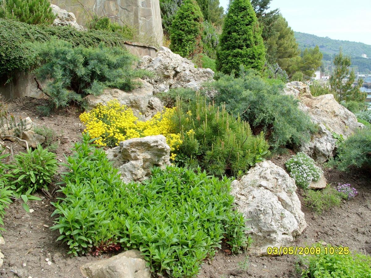 Крупные растения - на заднем плане рокария
