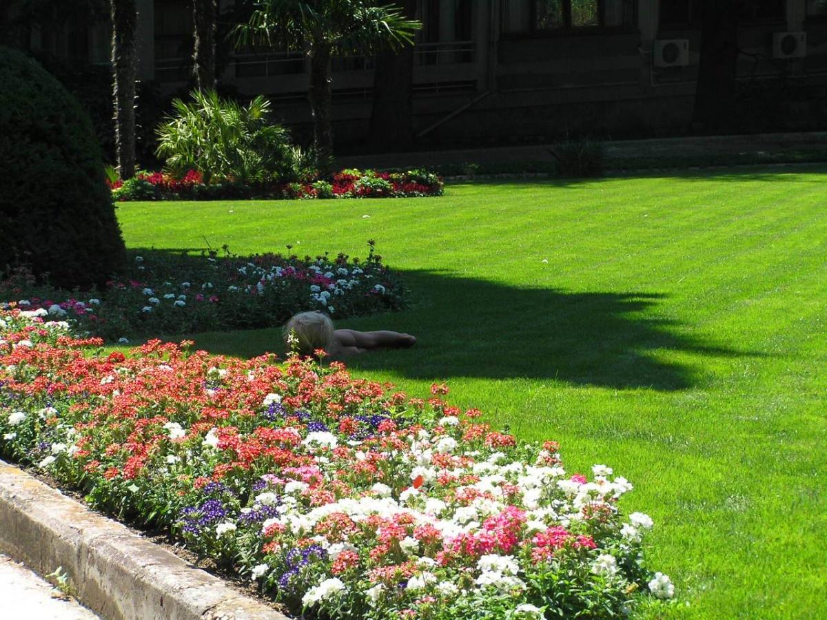 Фото домашних цветов кодиеум