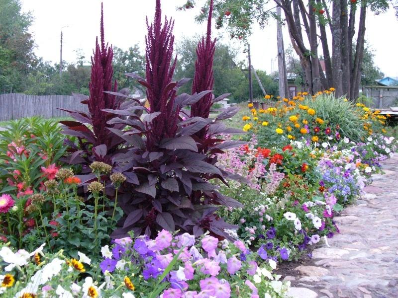 Цветы вдоль тропинки 7