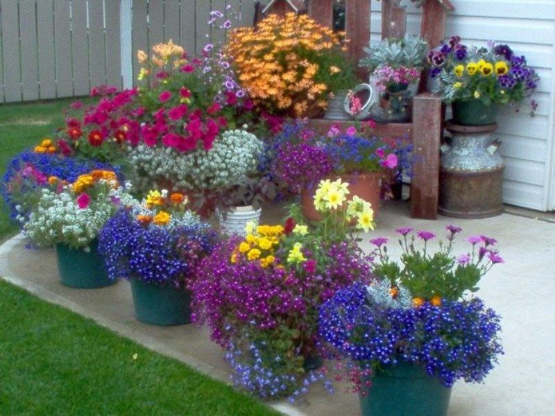 цветами в кашпо и вазонах