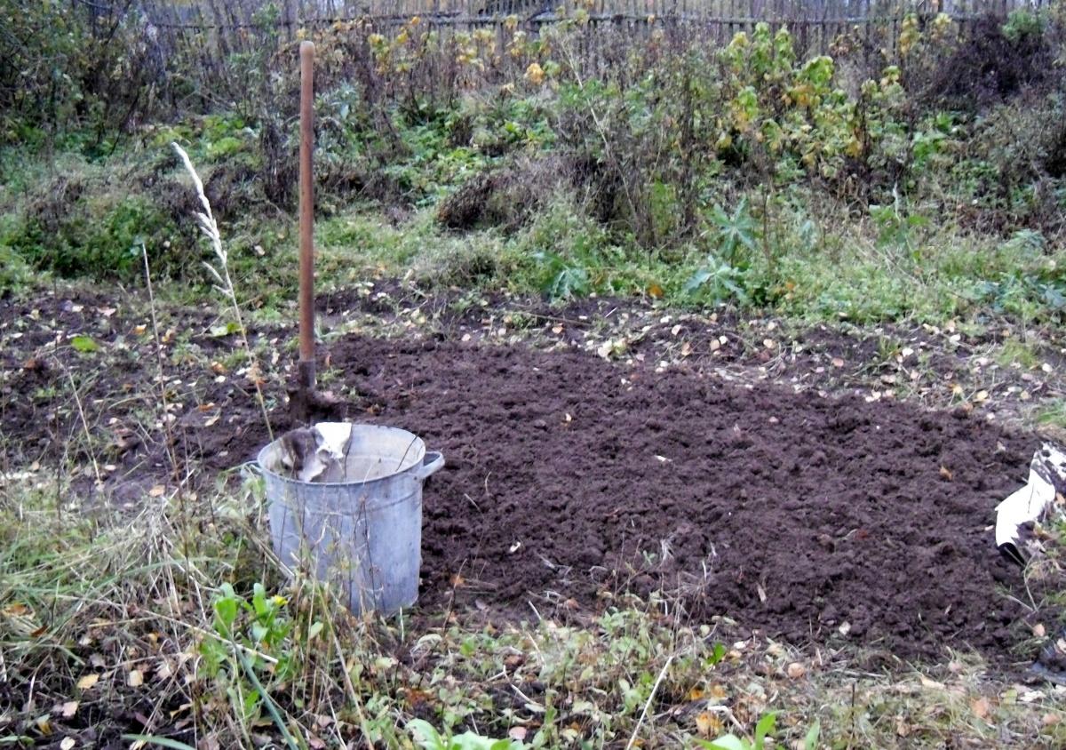 Огородные заботы