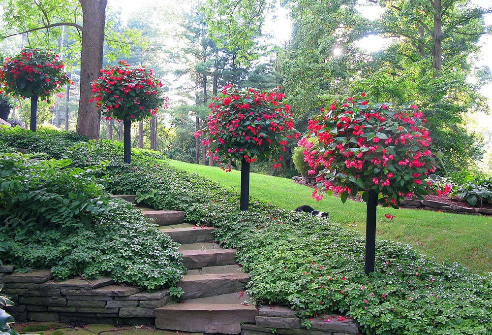 Мой прекрасный сад своими руками 96