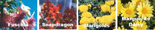 Растения, не подходящие для боковых сторон контейнера