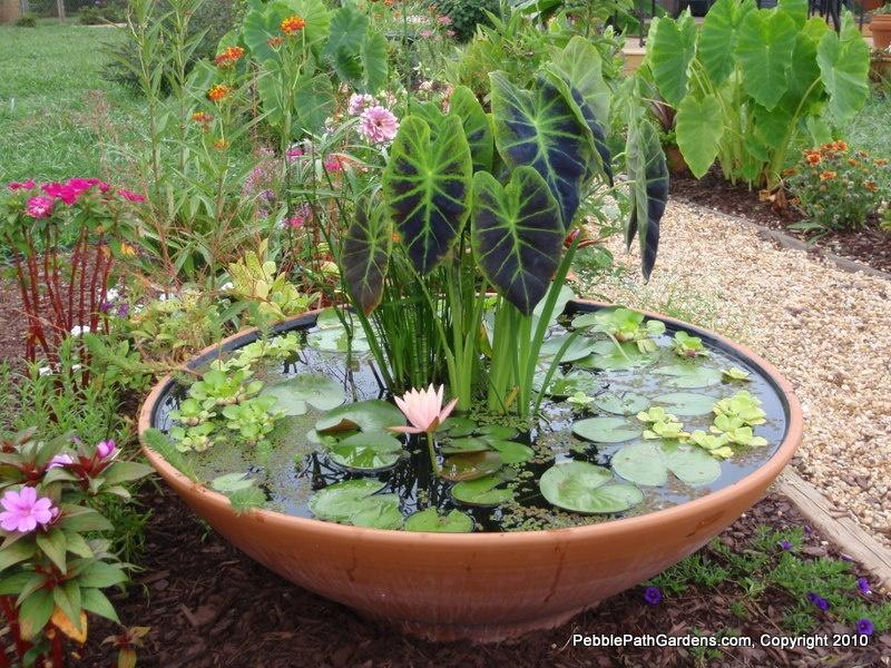 Мини-пруд в саду