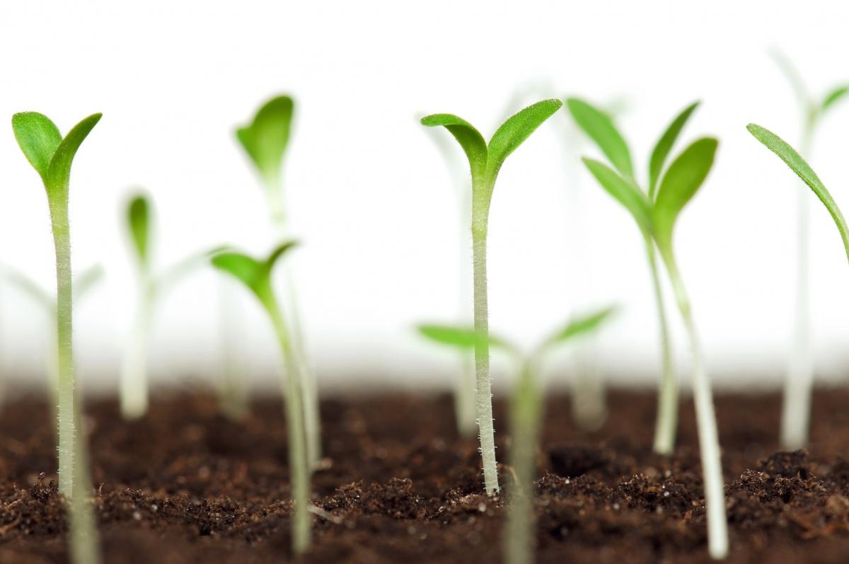 Магазин профессиональных семян цветов удобрений и товаров