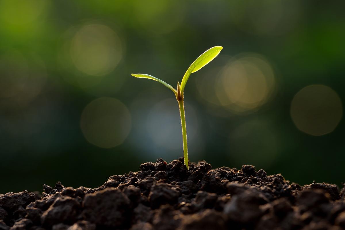 Состав смеси подбирают в зависимости от растения