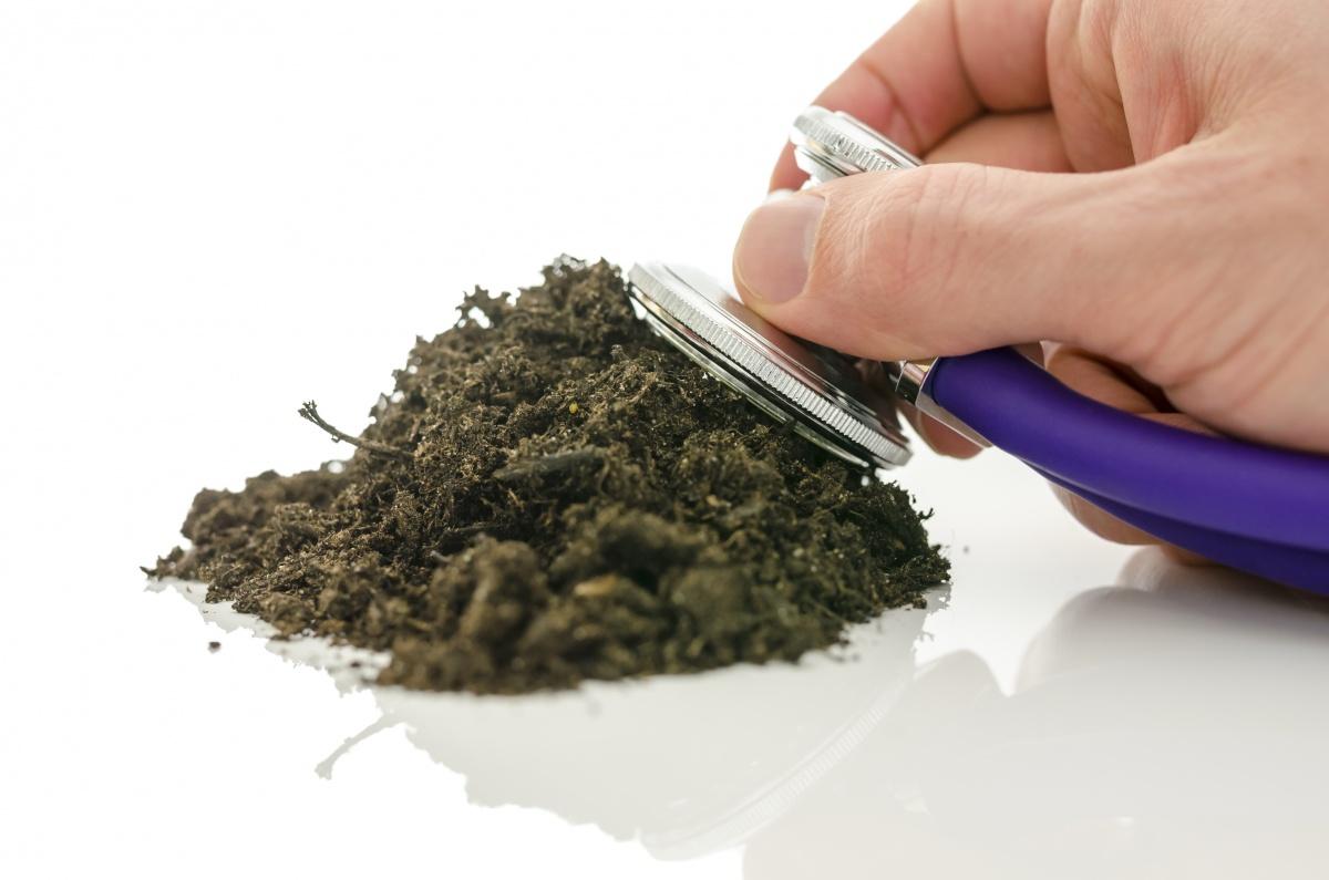 Здоровье почвы - здоровье рассады
