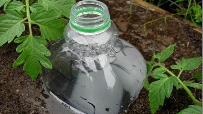 Капельный полив своими руками из пластиковой бутылки