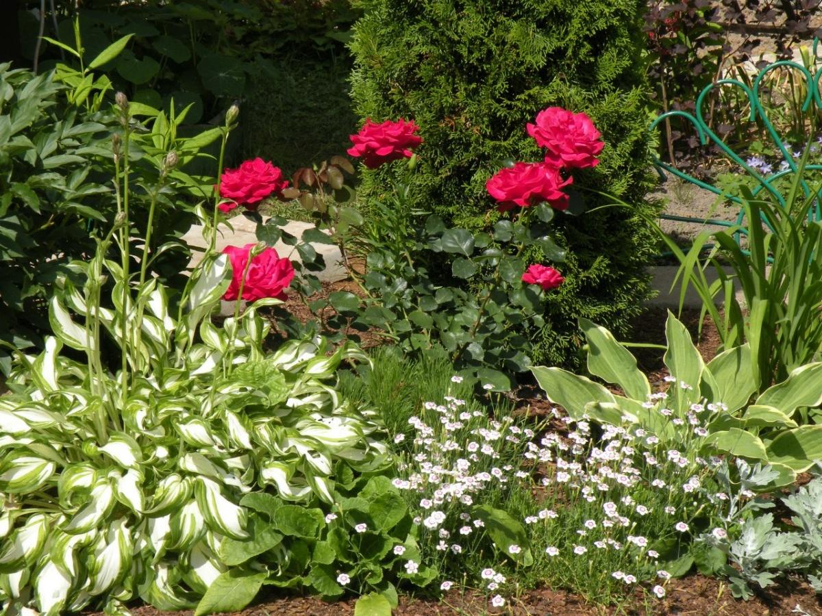 Новая жизнь старого сада