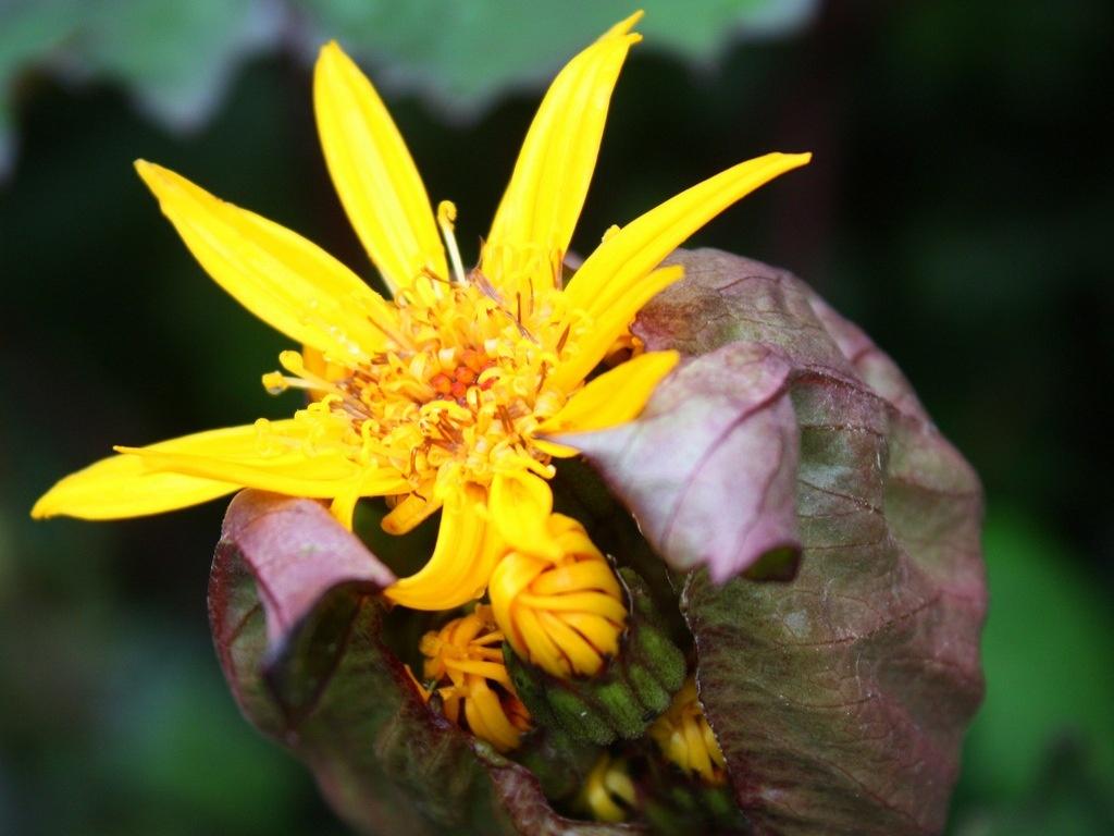 Желтые грибы в цветочном горшке фото