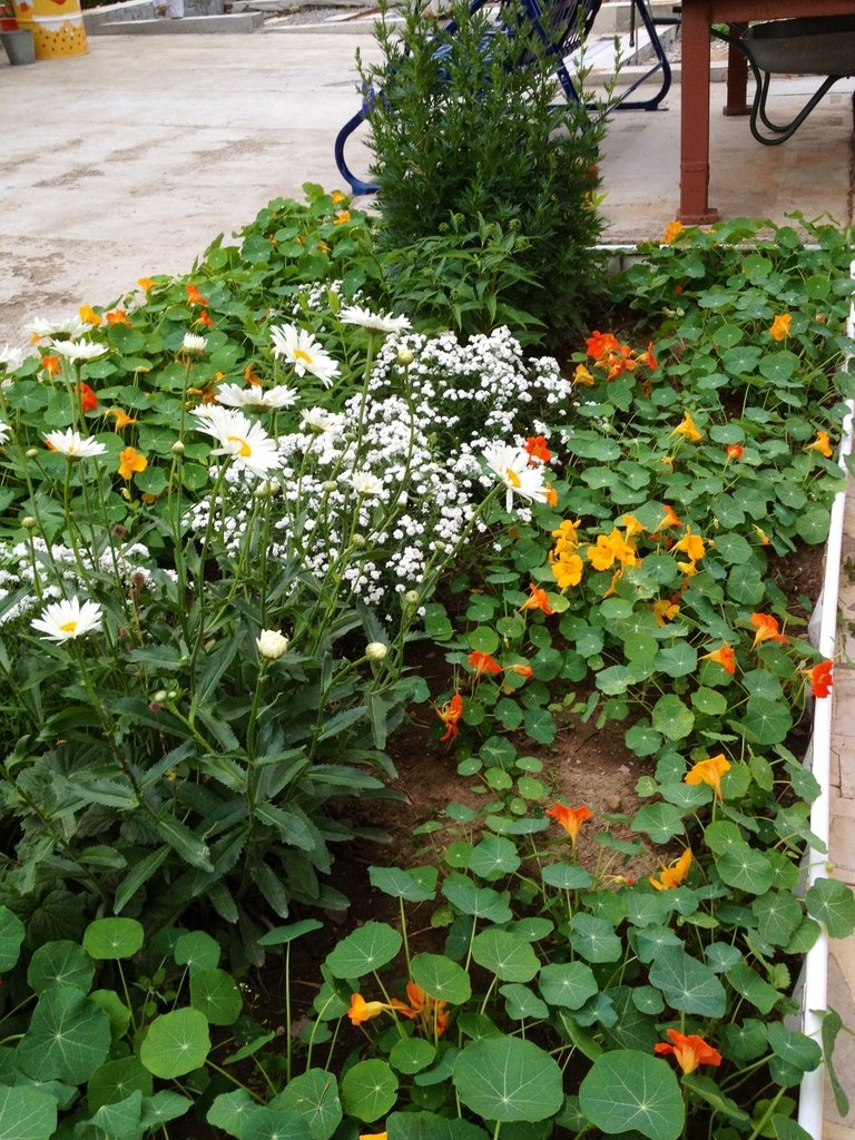 Грядка с цветами
