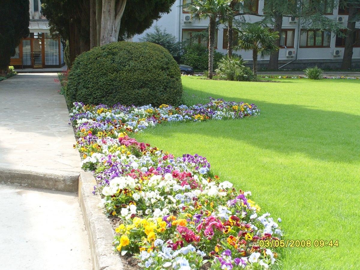 Зеленый цвет газона - фон для цветочных композиций
