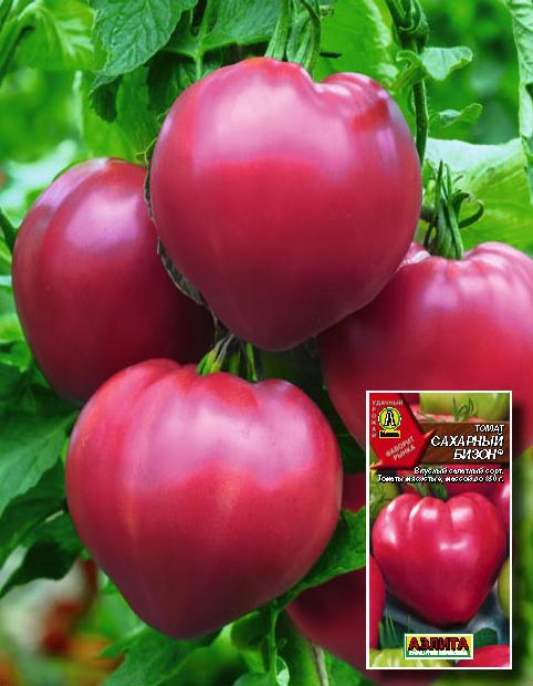 Томат Пузата хата: описание сорта, отзывы, фото, урожайность