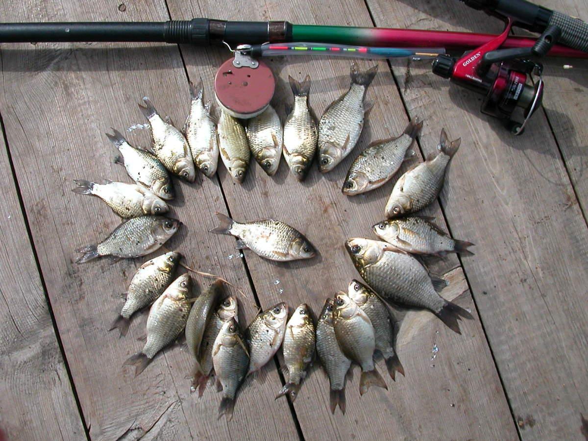 фотографии рыбного улова будем рассматривать преимущества
