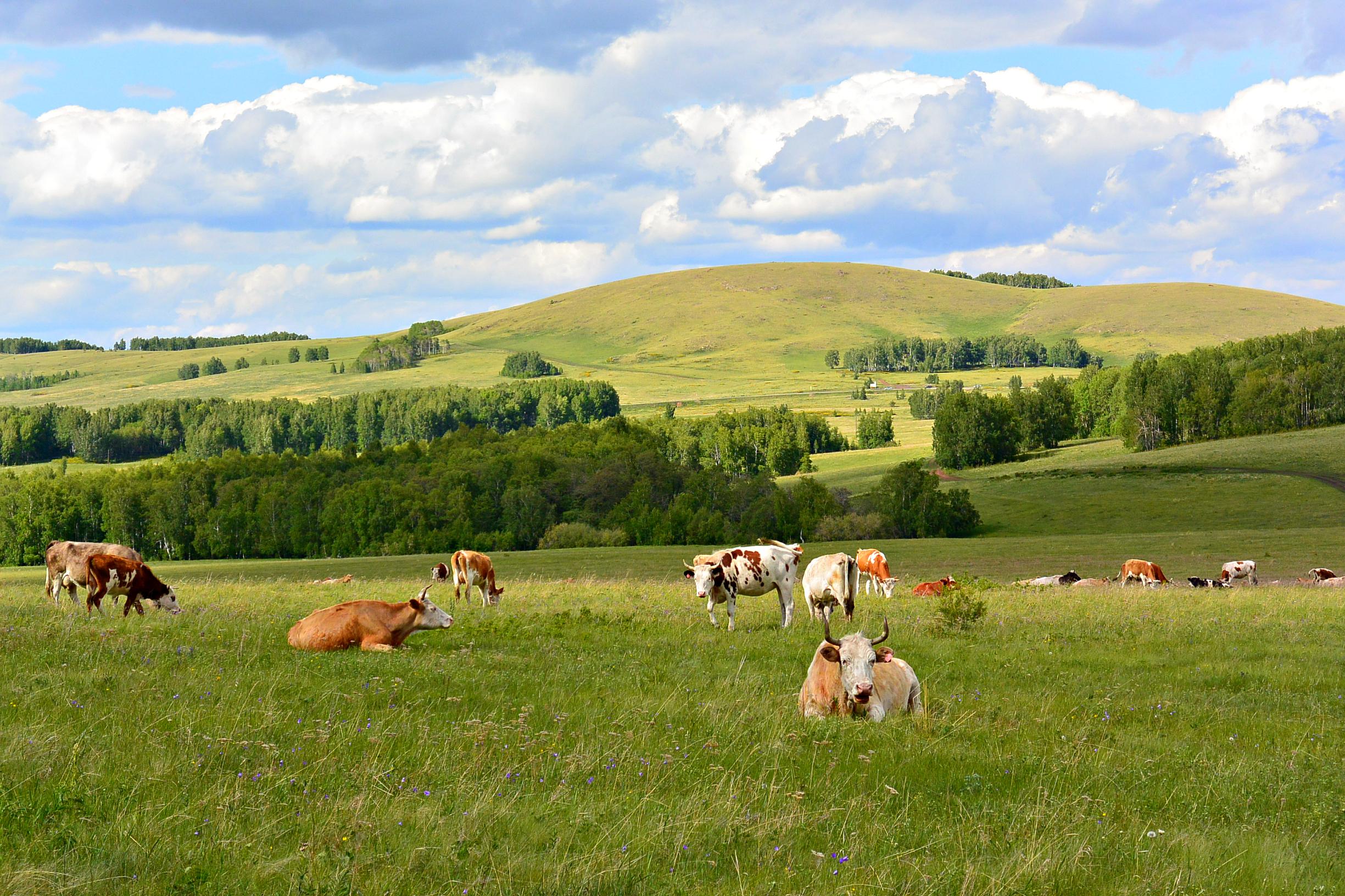 Картинки коровы и лошади на лугу