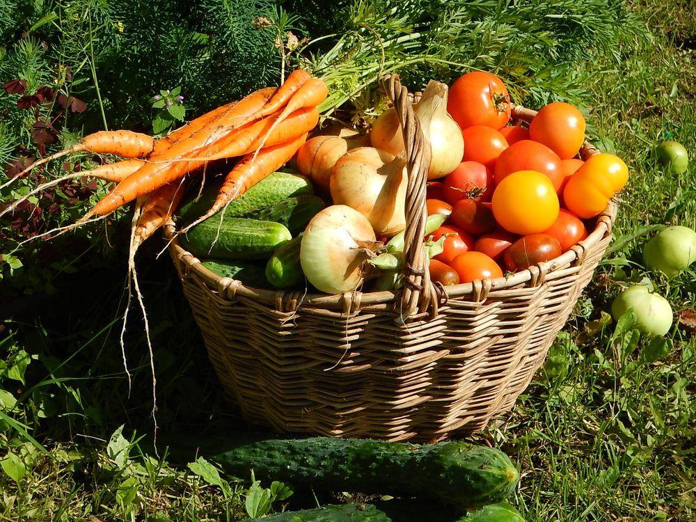 была довольно урожай с огорода фото лакомство дрожжевого теста