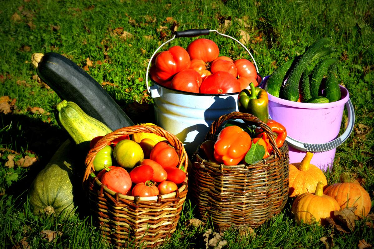 автоматического водяного картинки богатый урожай овощей того, чтобы