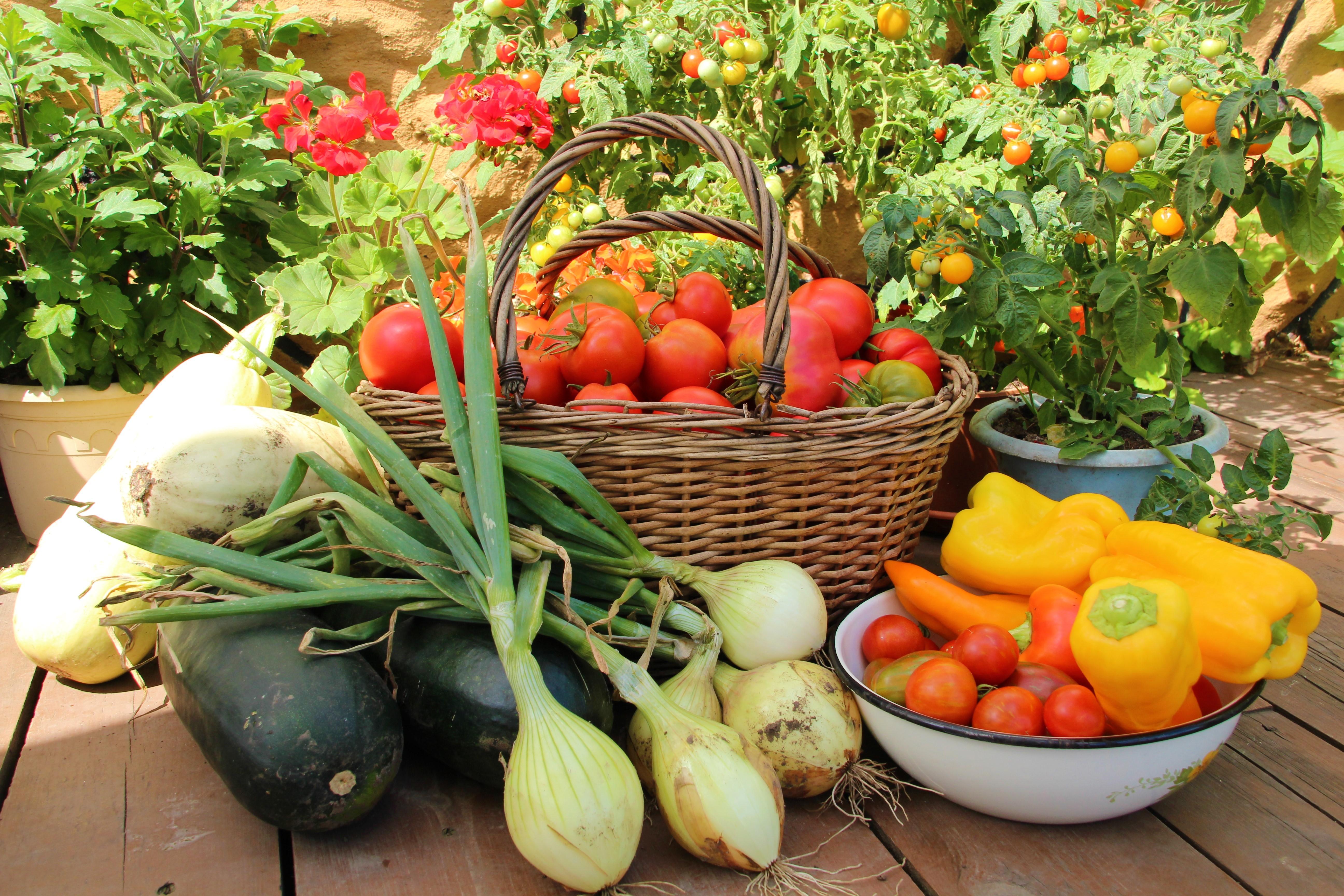 телят картинки богатый урожай овощей можно выполнить любом