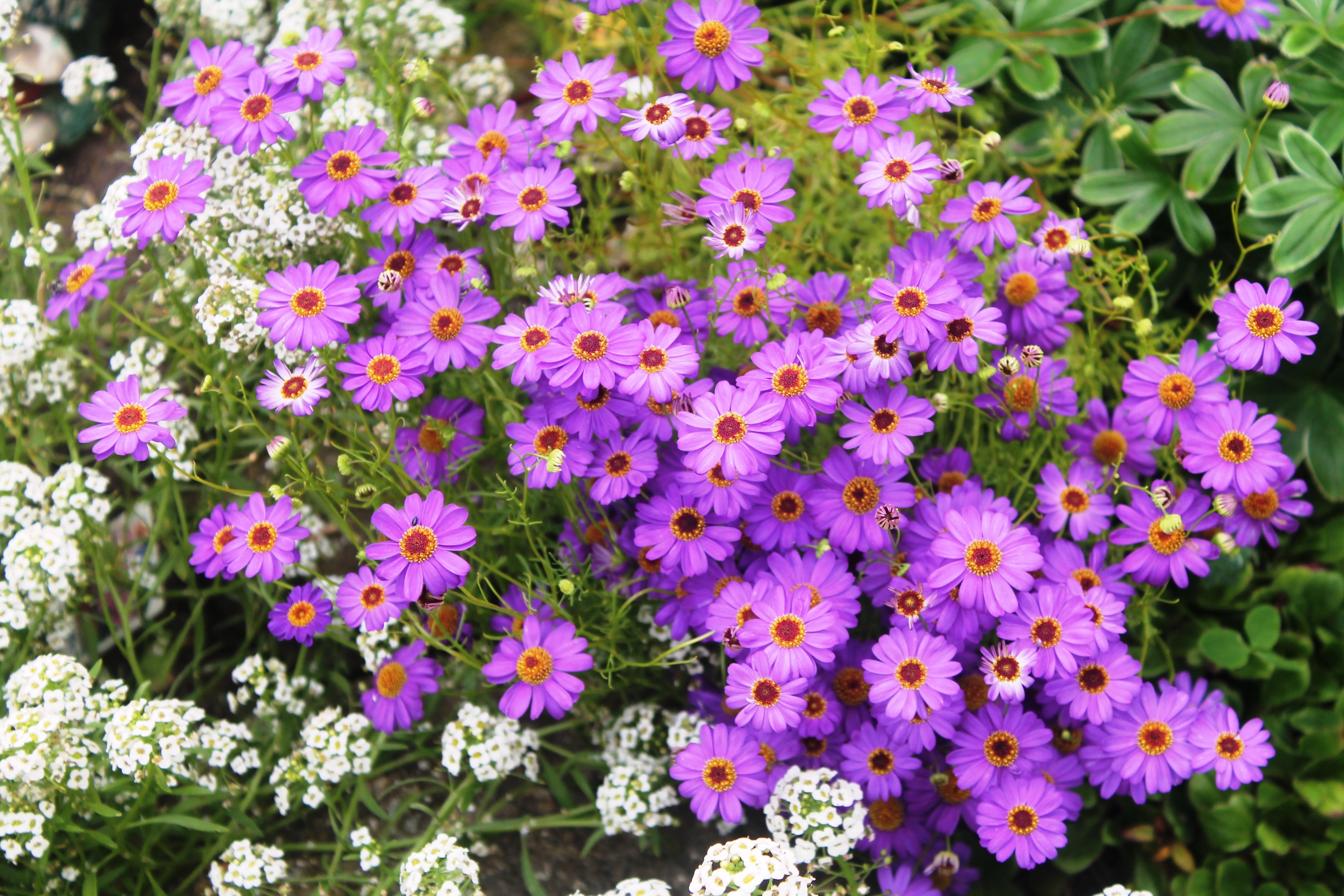 один брахикома фото цветов счастью