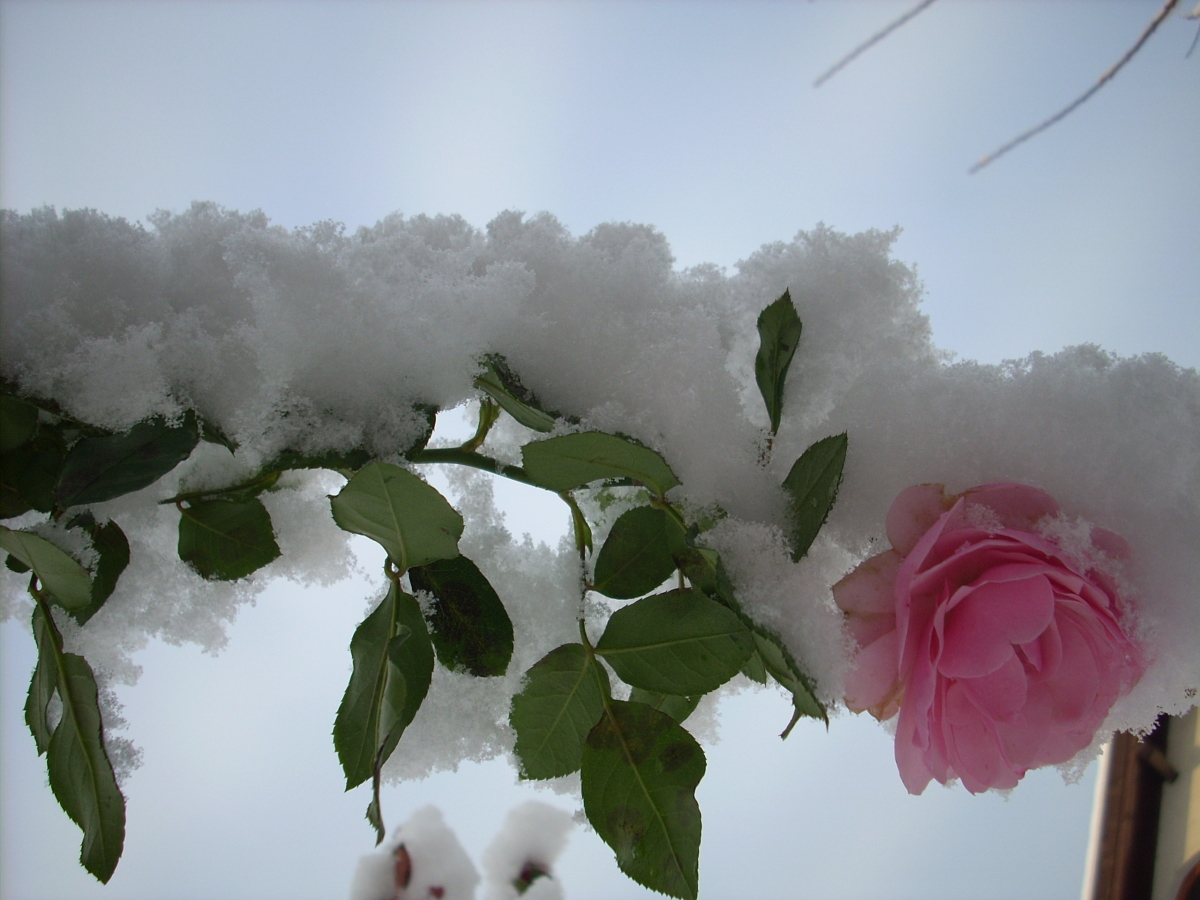 Однажды снег застал всех врасплох.