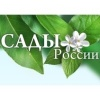 Sady_Rossii