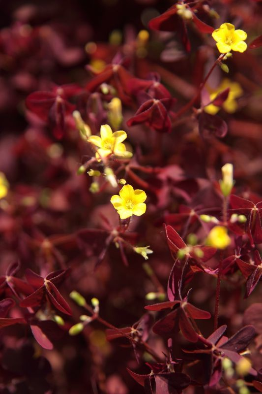 Маленькие-маленькие ) цветочки