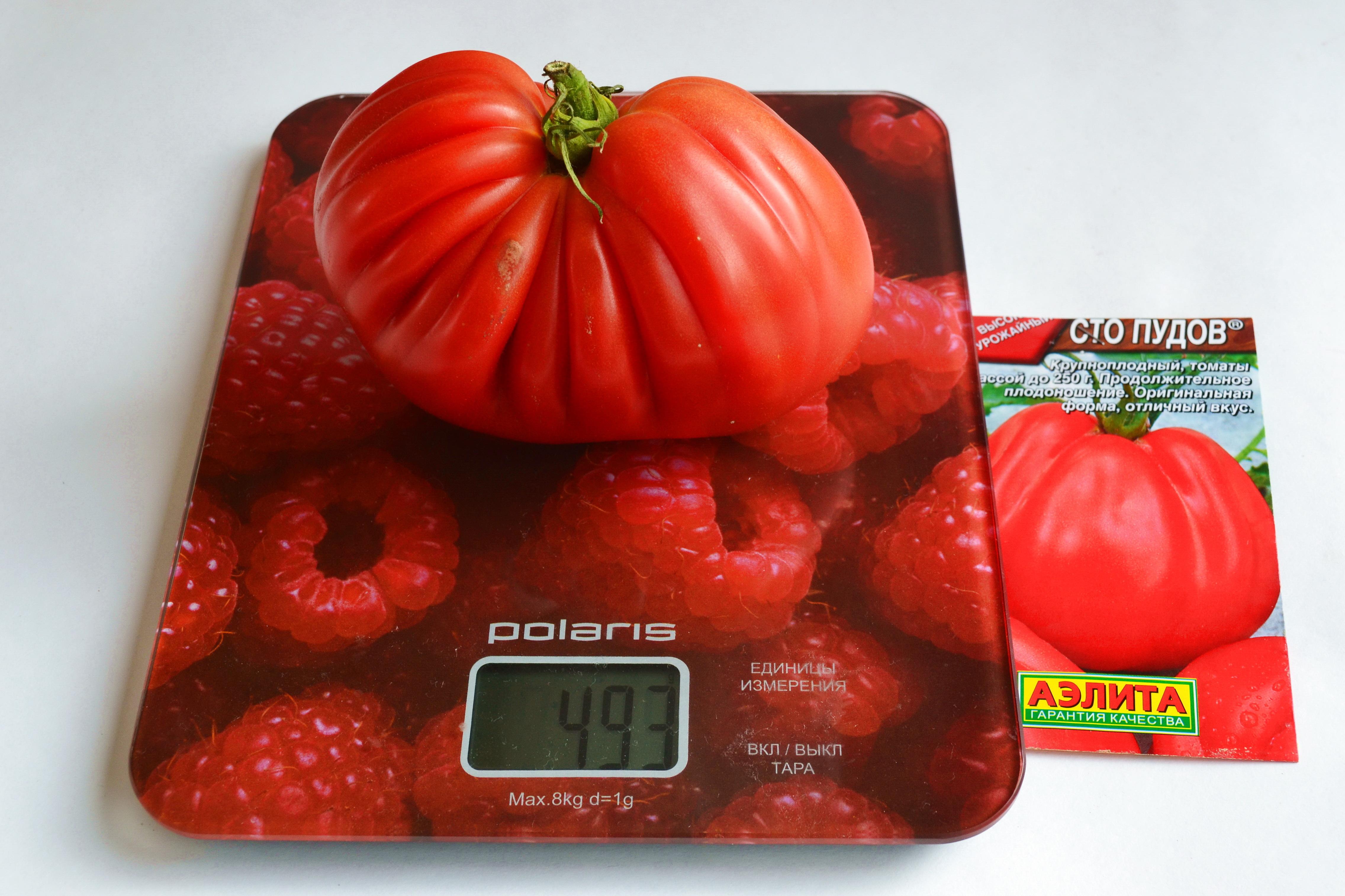 препараты средства томаты сто пудов отзывы с фото большинстве