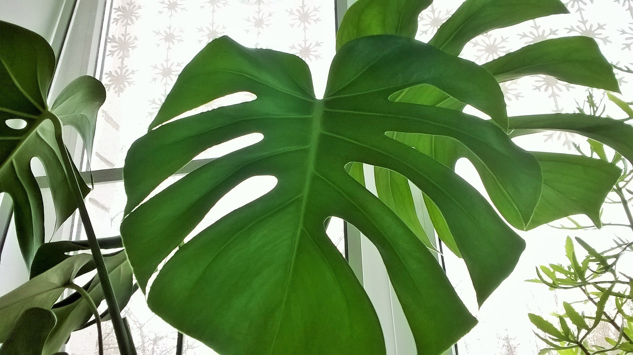 Картинки монстер растения