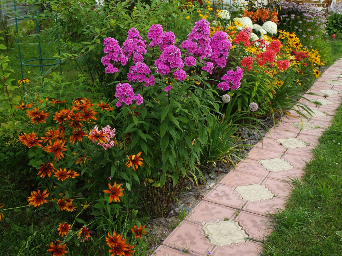 чмоки красивые цветники вдоль дорожки фото девочки