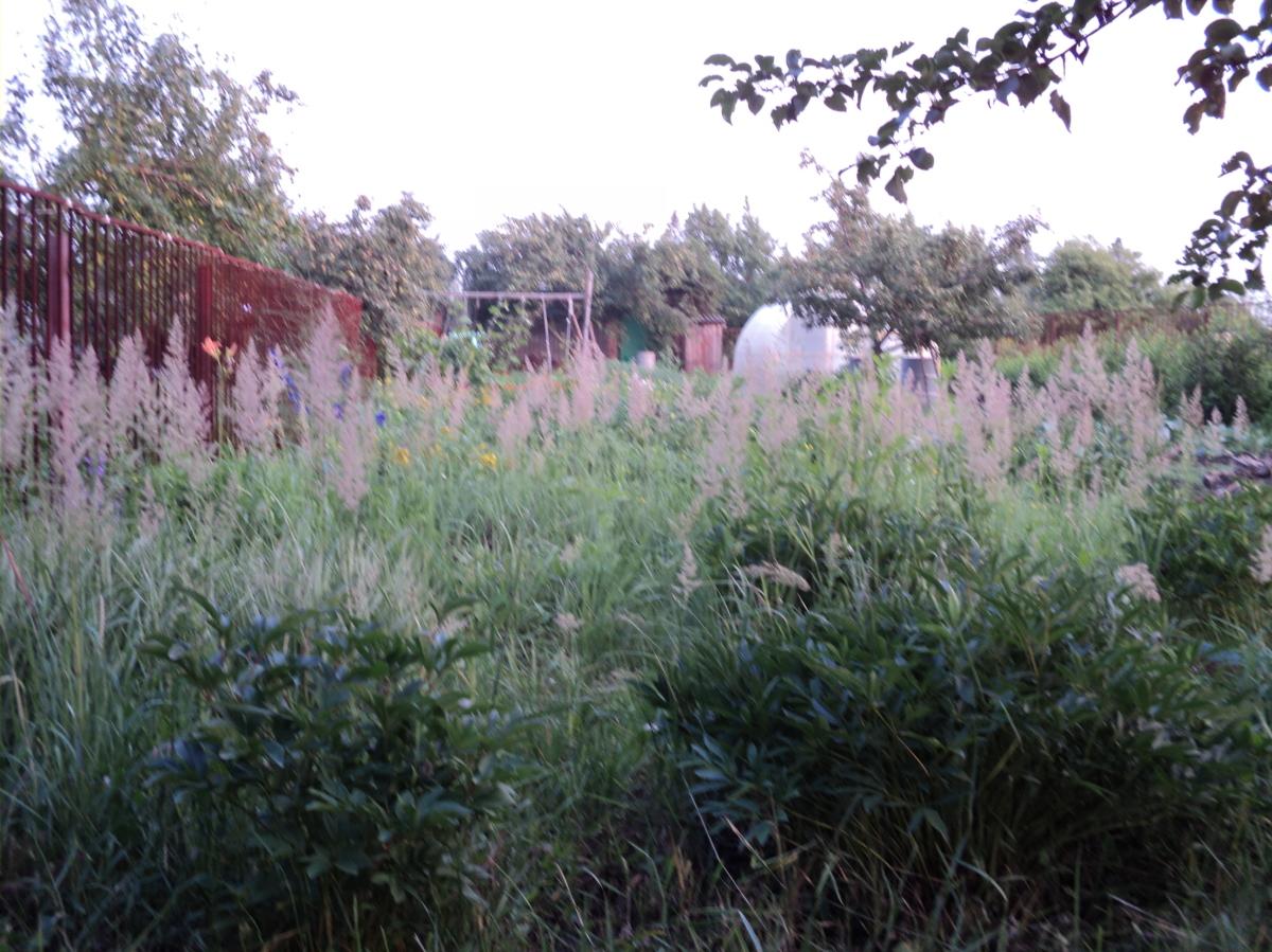 трава бушует