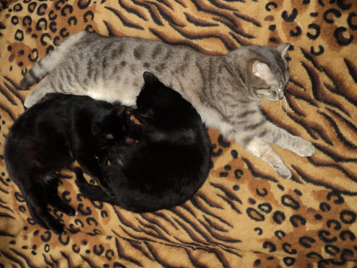 Спящее царство котов