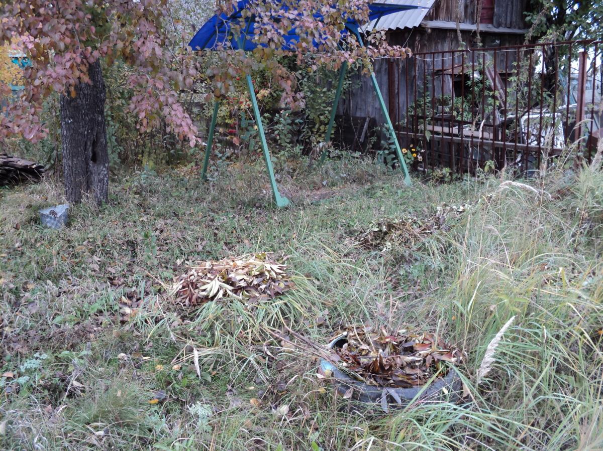 пионы под листвой