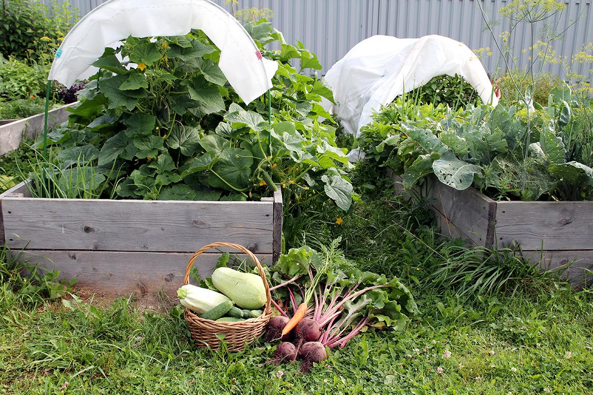 Урожай с огорода фото