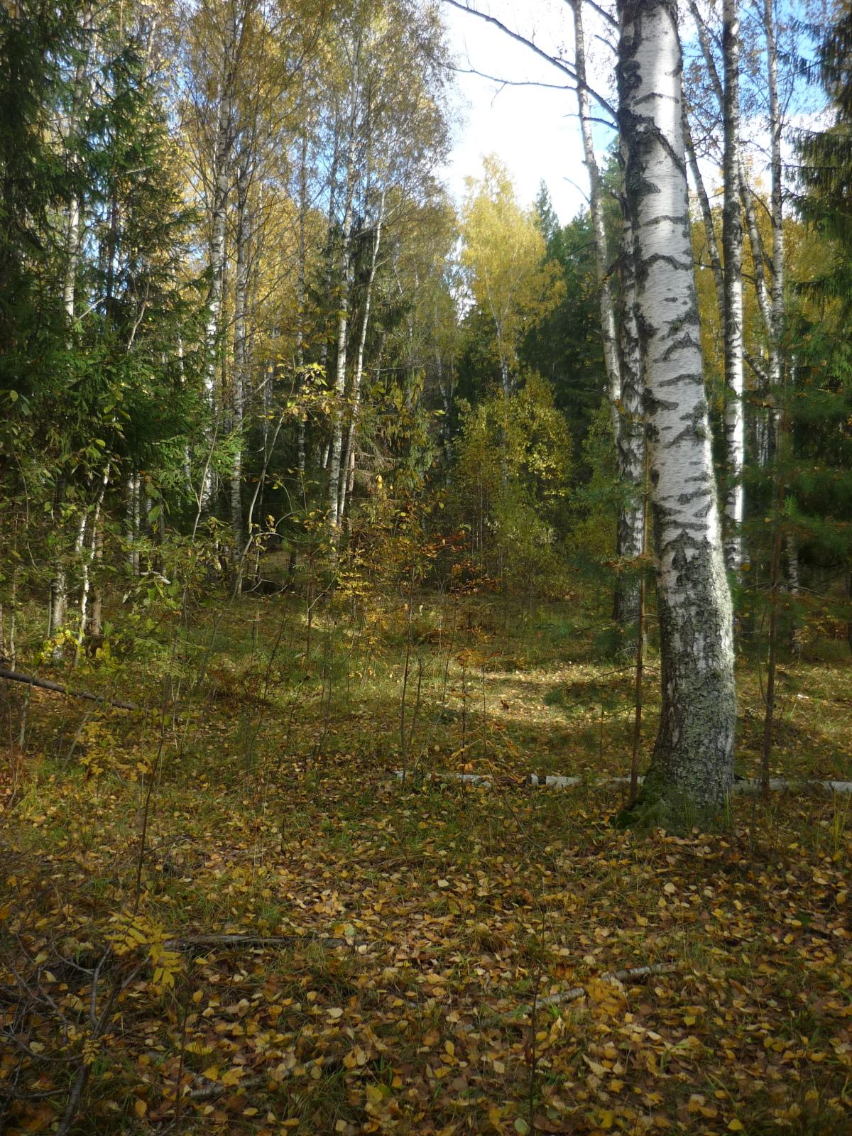 фотографии в заволжских лесах скупаются любые