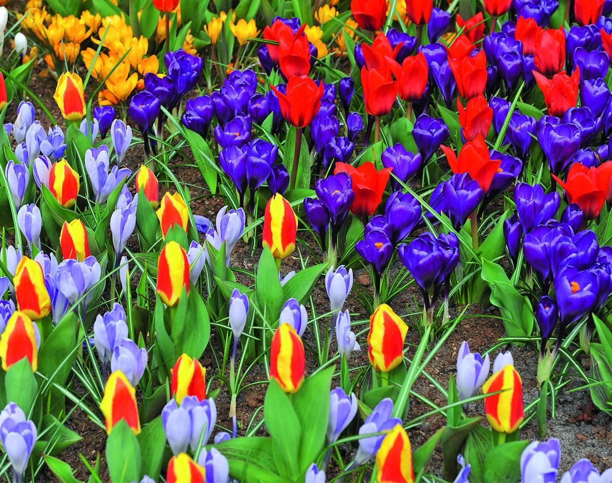 устройство для посадки луковиц и рассады_садовый инвентарь_огородный инвентарь_инвентарь для посадки цветов_садовая лопатка_садовые грабельки_посадочная лопатка_лопатка с делениями_веерные грабельки_лопатка посадочная_матыжка_все для сада и огорода_садово-огородный инвентарь_малый садовый инвентарь_органические удобрения для цветов_грунт для посадки цветов